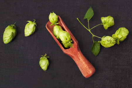 lupulus: Hop fruit in spoon on dark background from above. Beer drinking background.