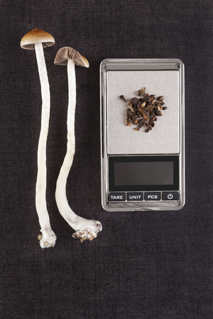 Fresh and dried psilocybin mushroom on digital pocket scale on black background, top view. Psychedelic therapeutic use.