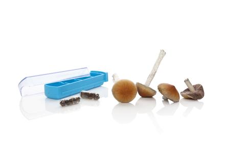 Fresh magic mushrooms, dry mushrooms in gel capsules and pill organizer isolated on white background. Psilocybin magic mushorrms. Alternative medicine.