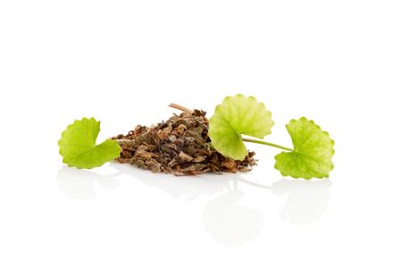 Dried and fresh gotu kola leaves isolated on white background. Asiatic pennywort. Stock Photo