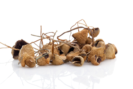 Medical dried magic mushrooms. Natural remedy. Isolated on white background. Stock Photo