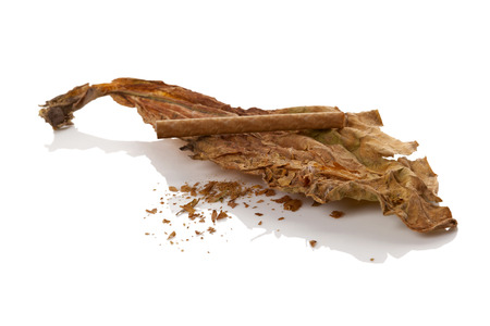 Dried tobacco leaves with cigarette isolated on white background. Nicotine addiction.