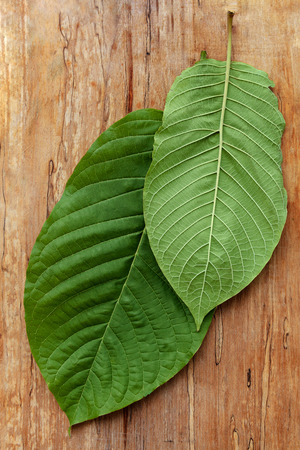 Healthy kratom leaves on wooden table from above.
