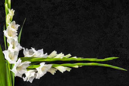 Gladioli flowers from above. Obituary or death notice concept. Stock Photo