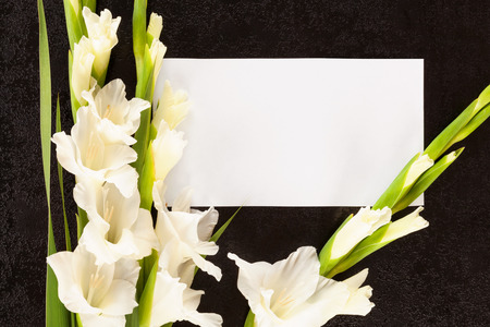Gladioli flowers with white card from above. Obituary or death notice concept. Stock Photo