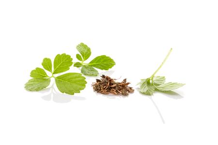 Gynostemma pentaphyllum. Medical herb jiaogulan isolated on white background.