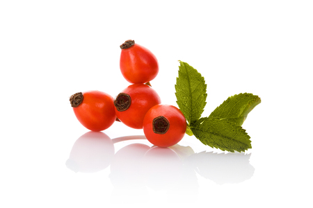 Rose hip isolated on white background. Medicinal healthy plant.