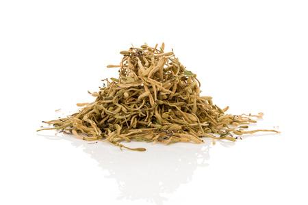 Dried cordyceps militaris mushroom isolated on white background. Adaptogen, hormones, vitality.