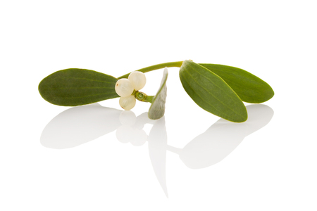 Mistletoe branch with berries isolated on white background. Immunity booster. Natural remedy.