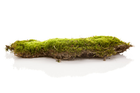 Grünes Moos lokalisiert auf weißem Bakground.