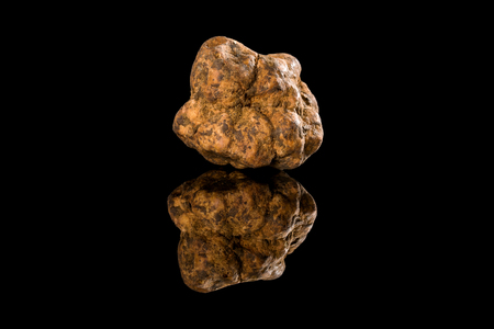 Whole white truffles on black background with reflection. Luxurious culinary cooking ingredients. Imagens