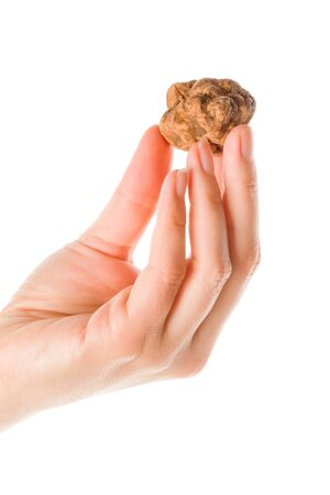 Whole white truffle in woman hand isolated on white background. Culinary eating.   写真素材