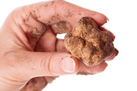 Fresh whole white truffle in woman hands with earth isolated on white background. Culinary eating.