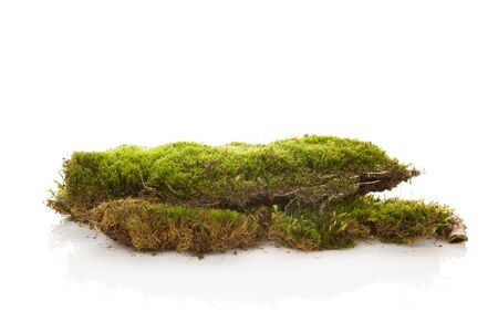 Green moss isolated on white background. Piece of nature.