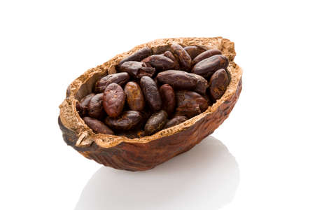 Fresh roasted cocoa beans in a cocoa pod on white background. Healthy superfood.