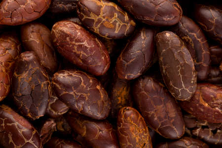 Fresh roasted cocoa beans background from above. Healthy superfood. Stok Fotoğraf