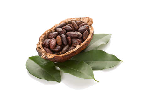 Fresh roasted cocoa beans in a pod with leaves isolated on white background. Healthy superfood.