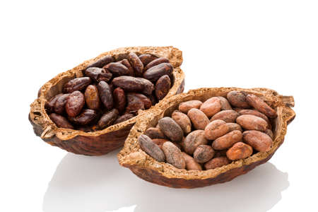 Unpeeled and fresh roasted cocoa beans in a pod isolated on white background. Superfood.