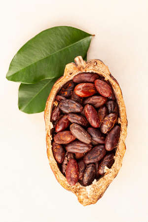 Fresh roasted cocoa beans in a pod with leaves from above.