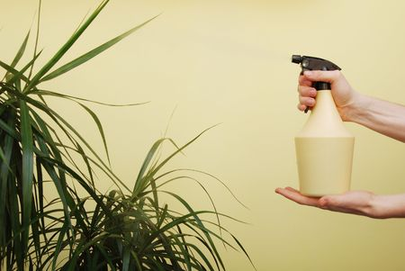 cleanser: Hands are holding and using plant watering spray             Stock Photo