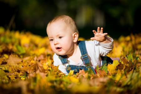 bebe gateando: Niño feliz en el otoño de día soleado