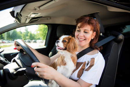 cavalier: Mature woman and her cavalier dog together behind steering drive car Stock Photo