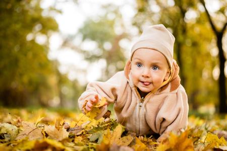 Autumn portrait of cute baby boy crawling Stok Fotoğraf