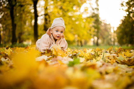 Crawling baby boy outdoors in autumn park