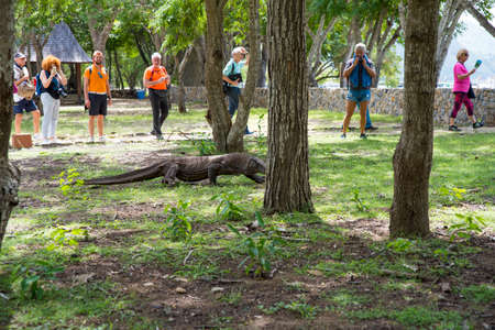 Komodo Dragon, the largest lizard in the world walks on ground. It is a dangerous prehistoric animal. Some tourists around and the rangers make the place safe. Komodo Island, Indonesia, south Asia. Editorial