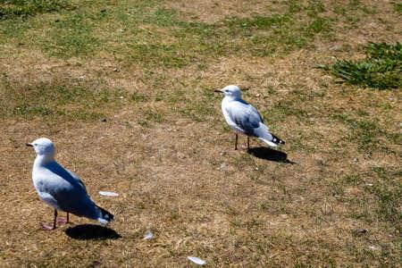 wild white birds in a garden in a wild life