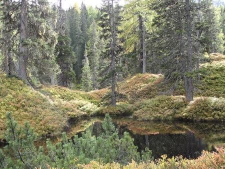 rauris: Rauriser jungle in autumn