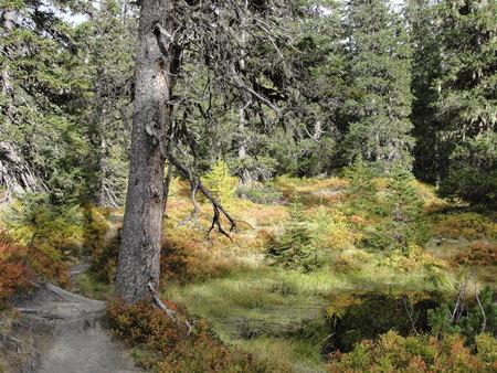 rauris: Hiking in Rauriser jungle