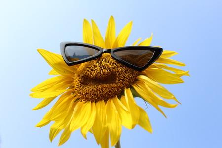 Sunflower with sunglasses Фото со стока