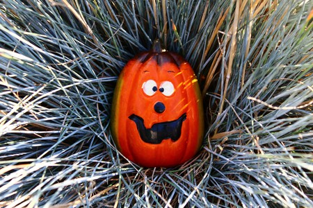Funny pumpkin in the ornamental grass Standard-Bild