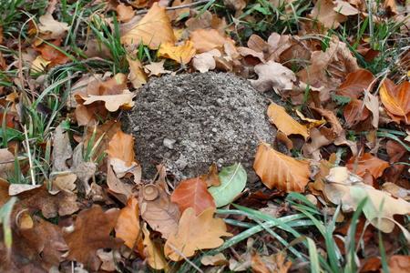 molehill Imagens