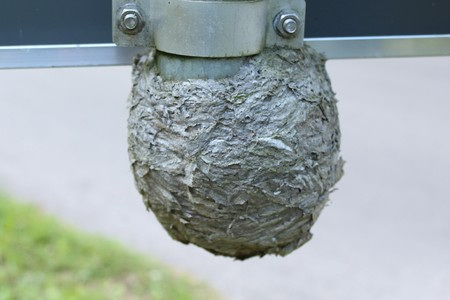 Wasp nest at a road sign
