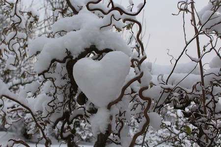 heart of snow in the willow Reklamní fotografie