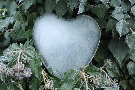 Ice heart in the ivy 版權商用圖片