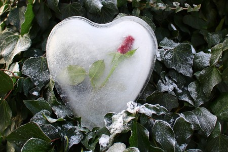 Heart of ice and a rose in the ivy