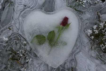 Heart of ice with a rose on frozen water Banque d'images - 117377565