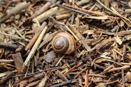 Brown snail shell