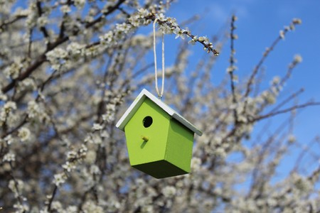 Birdhouse in a flowering bush Stockfoto