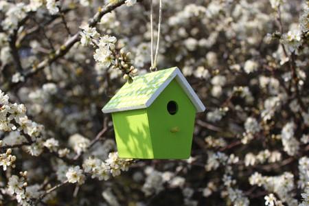 Vogelhuisje in een bloeiende struik Stockfoto