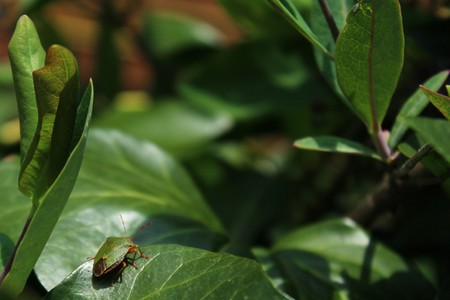 bug in the garden Stock Photo