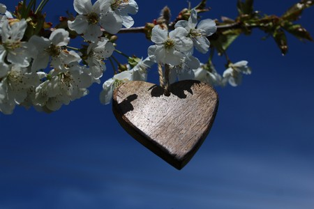 wooden heart in a blossoming bush 免版税图像