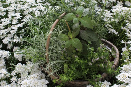 basket with herbs in the garden