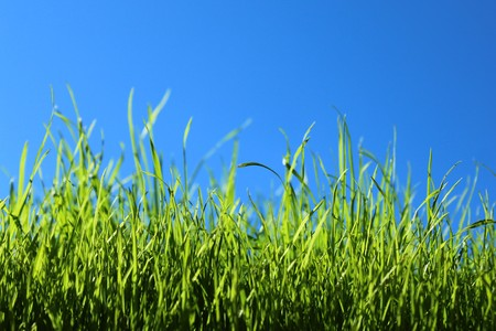 Grass in front of the green cloudless sky Imagens