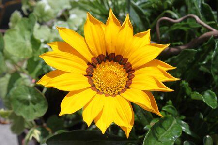 Treasure flower in the garden
