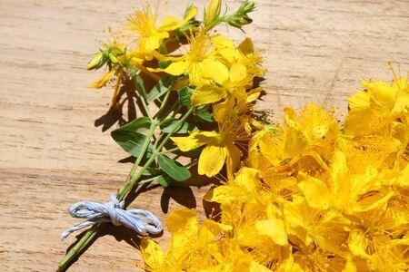 Many St John's word blossoms Stock Photo