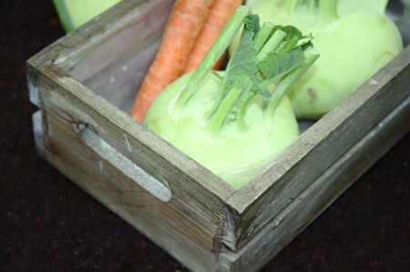 Cabbage turnip and carrots in the garden